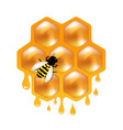 honeycombs with bee vector image