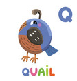 q is for quail letter q quail cute animal vector image vector image