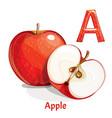 alphabet letter a apple vector image vector image