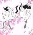 Cranes dancing vector image