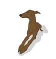 dog lies vector image vector image