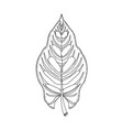 hand drawn leaf jungle tropical leave isolated vector image vector image