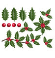 holly leaves berries and branches vector image vector image