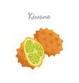 kiwano exotic juicy fruit isolated icon vector image