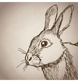 rabbit portrait forest hand drawing vintage vector image