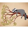 Raccoon on the tree vector image