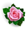 Rose flower vector image