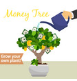 hand watering money tree vector image vector image