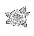 rose flower line art sketch vector image vector image