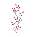 natural ornamentation with pink ivy on white vector image vector image