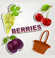 set of icons berries vector image vector image