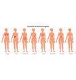 9 human body organ systems realistic educative vector image