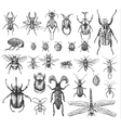 big set insects bugs beetles and bees many vector image