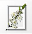 branch white cherry flowers in paper frame vector image