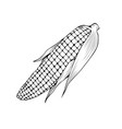 natural corn coloring book vector image vector image