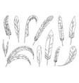 realistic detailed feathers set hand drawn vector image vector image