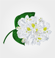 White rhododendron twig in bloom mountain shrub v vector image vector image