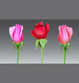 realistic roses buds with stem and leaves closeup vector image