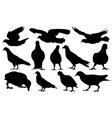 pigeons vector image