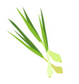 young onions with stems vegetable in flat style vector image