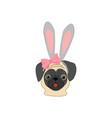 pug with rabbit ears vector image