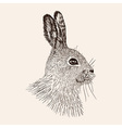 sketch rabbit hand drawn hare realistic vector image