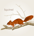 Squirrel on an old tree natural rodent vector image