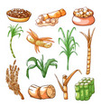 sugar sweet cane farming and industry hand drawn vector image