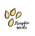 drawing pumpkin seeds vector image vector image