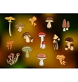 Forest edible mushrooms set on blurred background vector image vector image