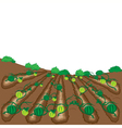 watermelon fruit cartoon vector image vector image