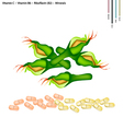 Zucchini Blossoms with Vitamin C B6 and B2 vector image vector image