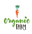 organic farm carrot white background image vector image