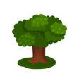 summer sprawling tree vector image vector image