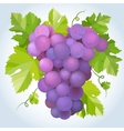 black grapes vector image