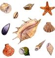 set of watercolor drawing shells vector image
