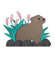 a brown lemming vector image vector image