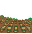 pineapples fruit cartoon vector image vector image