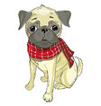 pug dog face - isolated on white background vector image