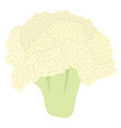 cauliflower icon vector image