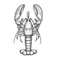 ink sketch of lobster vector image vector image