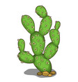 large green prickly cactus in cartoon style vector image vector image