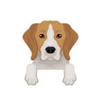 lovely beagle dog peeking out from border cute vector image