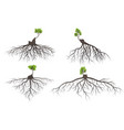 set of tree roots vector image vector image