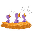 Three baby birds in nest vector image