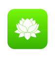 water lily flower icon digital green vector image vector image