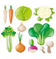 different types of fresh vegetables vector image vector image