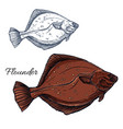 flounder fish ocean flatfish isolated sketch vector image vector image