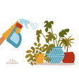 hand spraying house plants in pots water vector image vector image