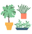 houseplants in pots or vases plants foliage vector image vector image
